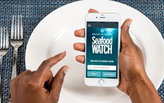 Seafood Watch App