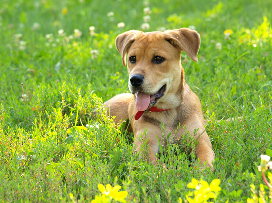 Dog Roxy enjoys the summer free of dog dehydration -- tips and more on how to keep your dog hydrated.