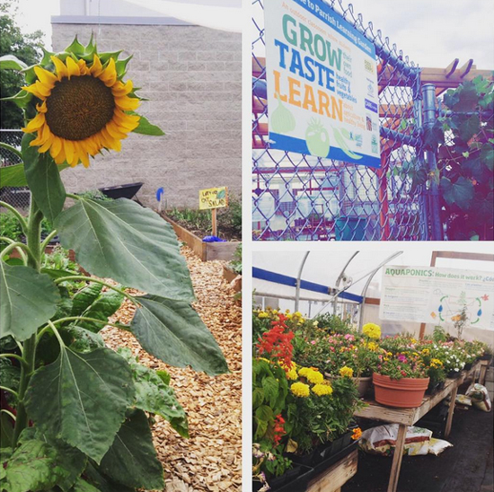 A school garden with education is a great way for how to start a farm to school program.