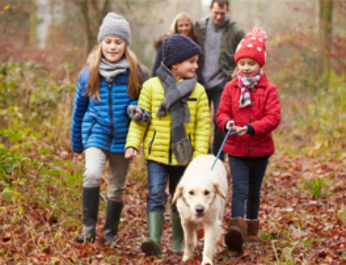 5 Simple Family Outdoor Activities for Winter