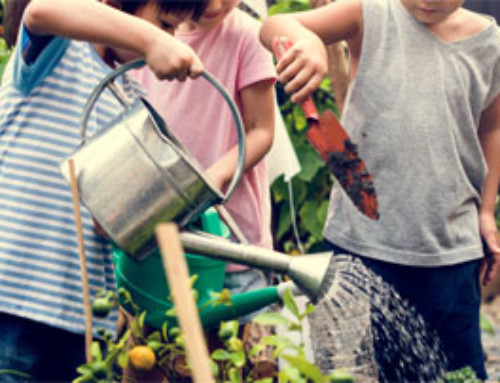 How to Start a Farm to School Program